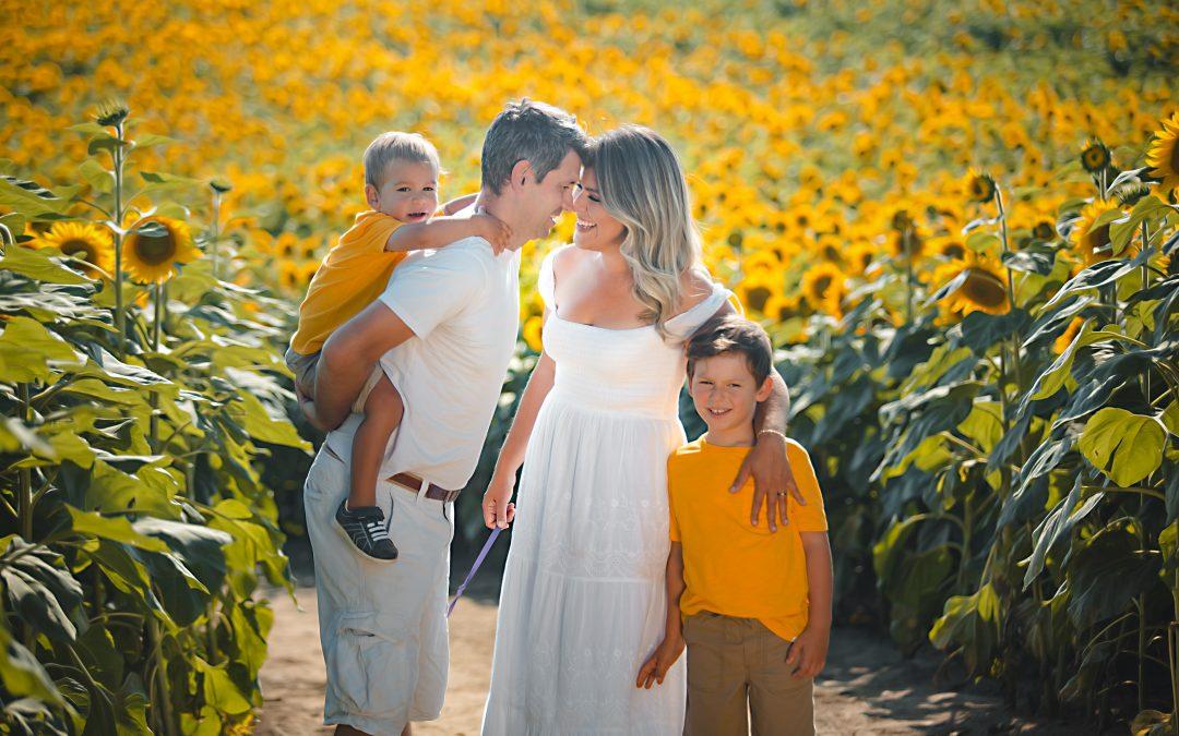 Toronto Sunflower -Família